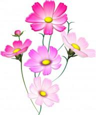 コスモスの花束イラスト