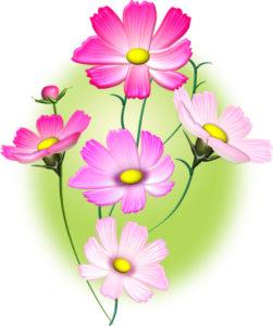 コスモスの花・若草色背景のイラスト