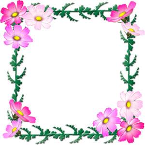 コスモスの花の飾り枠イラスト
