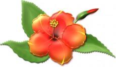 ハイビスカスの花イラスト