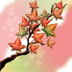 紅葉の錦イラスト