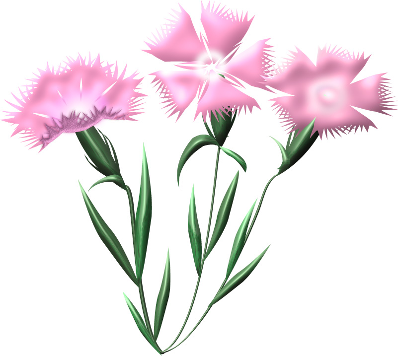 ピンクの撫子の花のイラスト