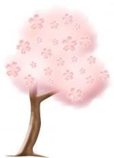 満開の桜の木のイラスト