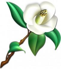白い椿のイラスト