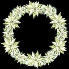 白いポインセチアのクリスマスリースのイラスト