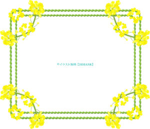 菜の花の飾り枠イラスト
