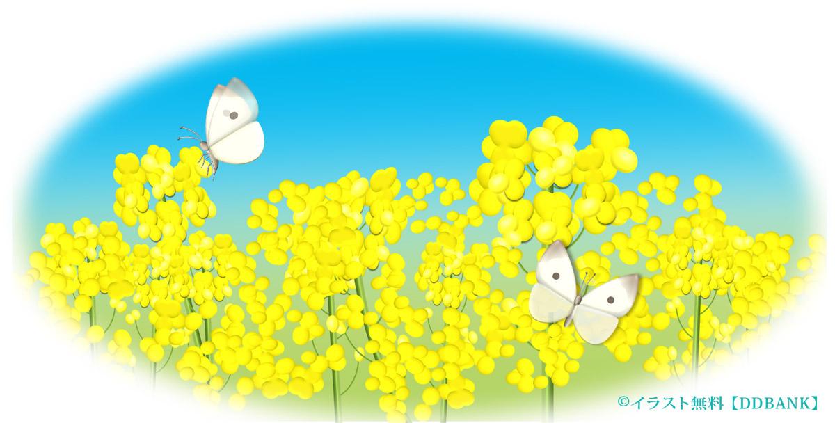 菜の花と紋白蝶 イラストが無料のddばんく