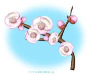 桃の花・一枝のイラスト