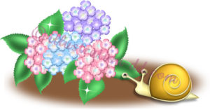 紫陽花(あじさい)とカタツムリのイラスト