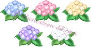 紫陽花(あじさい)5色のイラスト