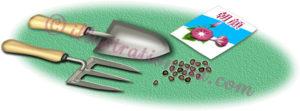 朝顔の種と園芸用具のイラスト