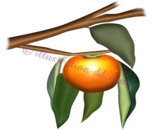 柿のなる枝のイラスト