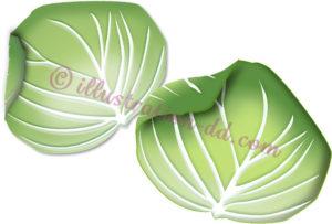 キャベツの葉のイラスト