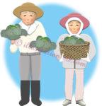 収穫したキャベツを持つ農家の老夫婦のイラスト