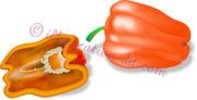 縦半分と丸ごとの橙色パプリカのイラスト