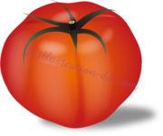 リアルなトマトのイラスト