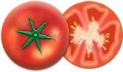 輪切りトマト断面のイラスト