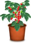 プチトマトの鉢植えのイラスト