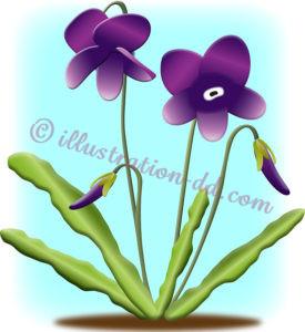 スミレの花のイラスト