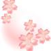 桜の花とピンクの霞背景