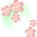 桜の花とミント色霞背景