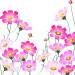 コスモスの花の群生